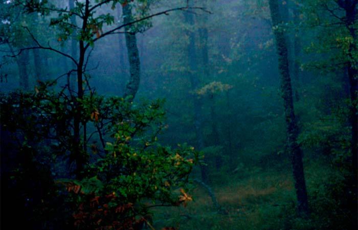 Έβρος δάσος Δαδιάς